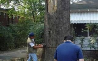 Кто должен спиливать деревья в частном секторе?